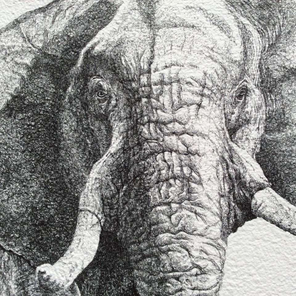 David Bigelow Elephant