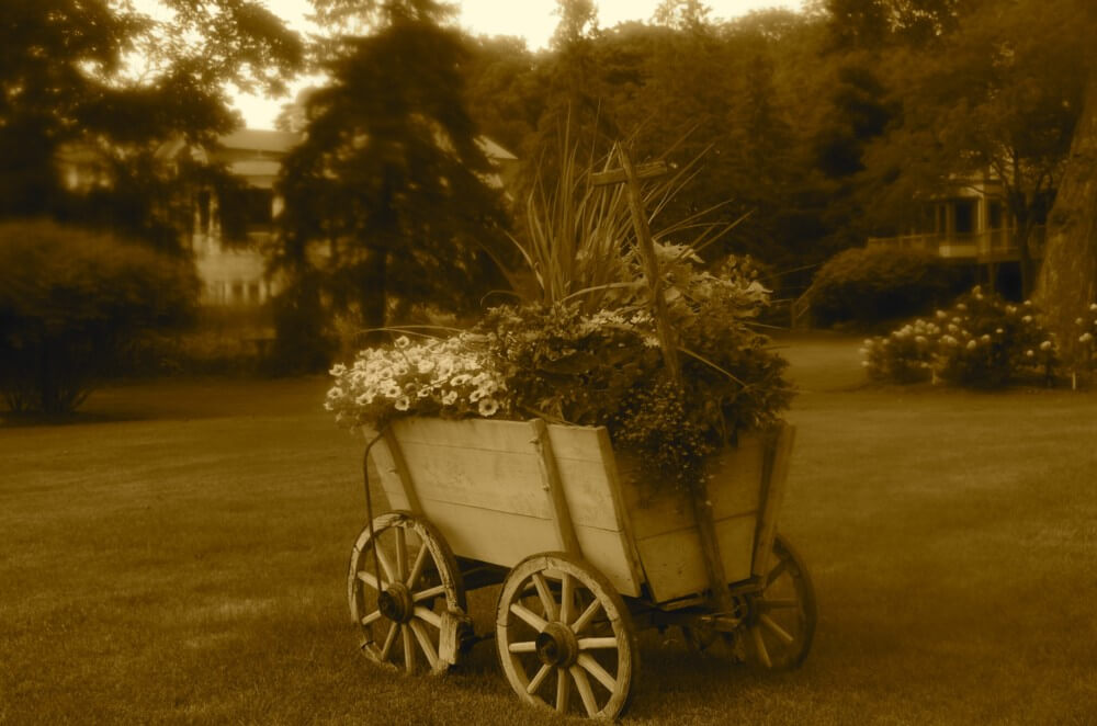 Old Fashioned Flower Cart by Brian Kabat